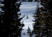 An avalanche in one of the tree chutes.