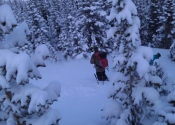 12-3-11 About to drop into the trees