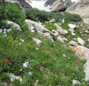 ...more flowers with the couloir in the background